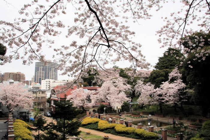 http://rains-photogallery.blog.so-net.ne.jp/_images/blog/_7fa/ichidigi_photogallery/IMG_3144.jpg